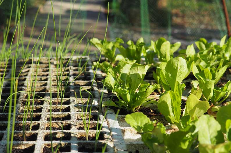 Researchers calculated how much food urban green spaces could produce
