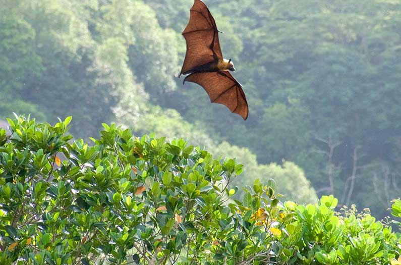 With help from bats, researchers created a coronavirus family tree